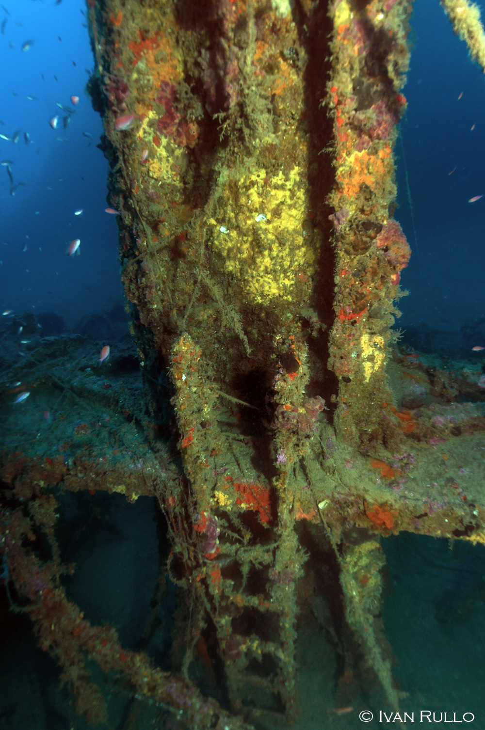 N IR8994 Relitto Laura Cosulich