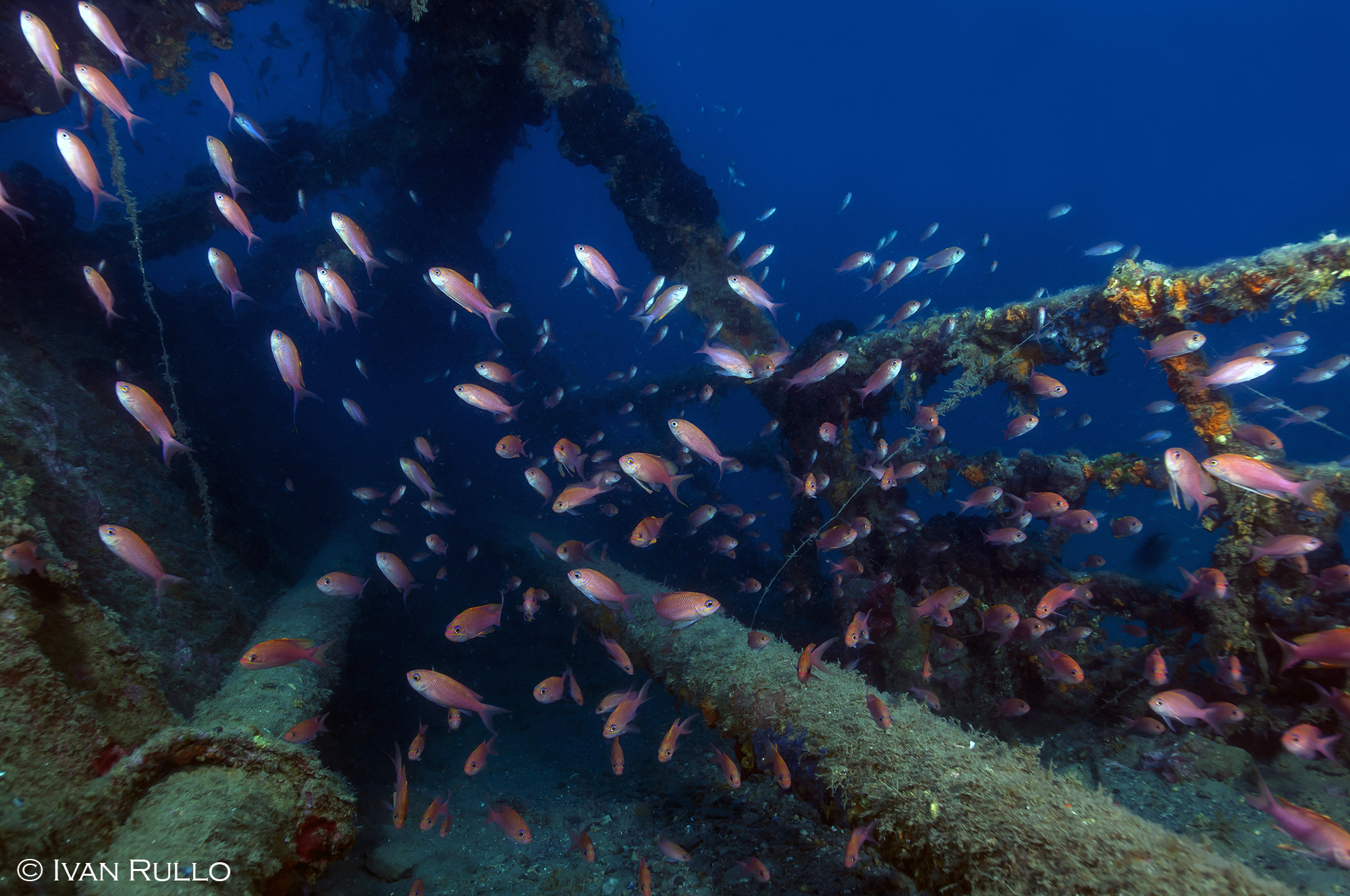 N IR9008 Relitto Laura Cosulich